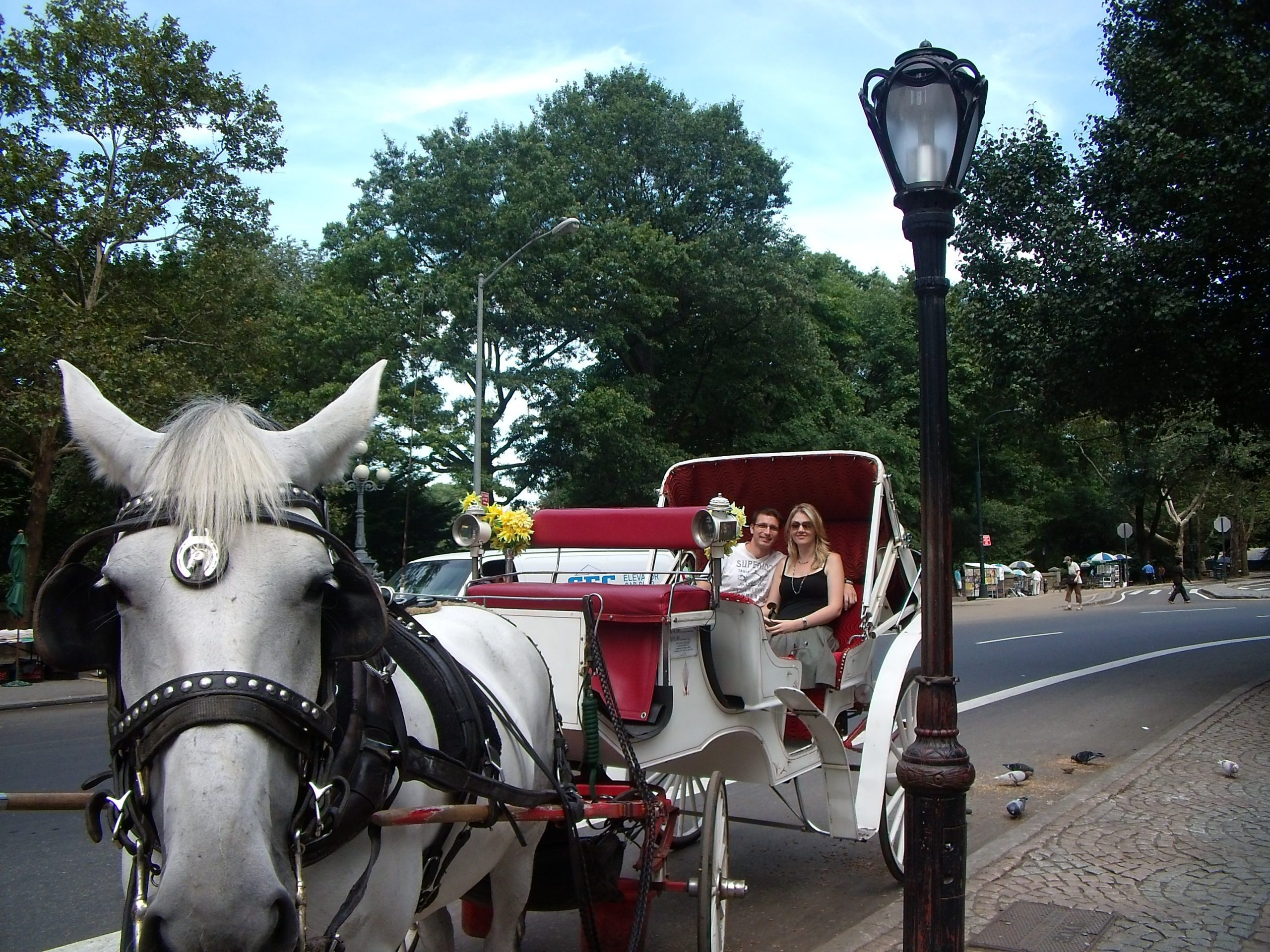 central park horse carriage ride new york city guide